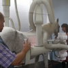 Radiografía de un caballo. Hospital Veterinario. Facultad de Veterinaria. Campus Miguel Servet