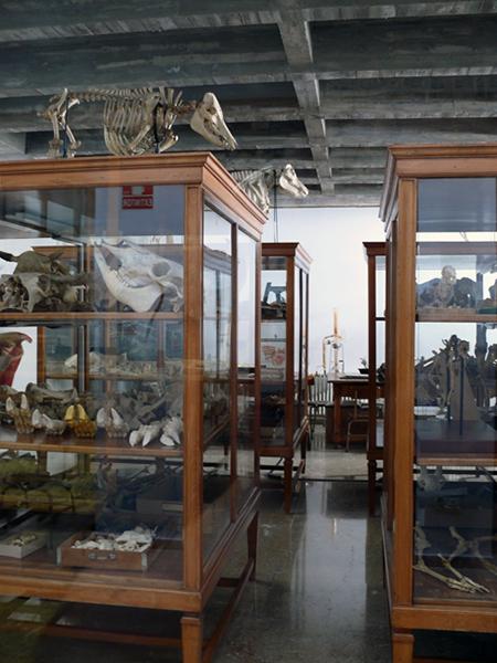 Museo de Huesos. Facultad de Veterinaria. Campus Miguel Servet